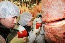 Meat Judging Competition: International merit awaits