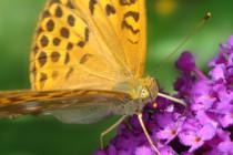 話題の生物多様性:なんで重要なの?