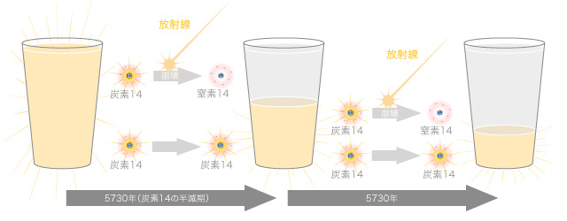半減期は放射性同位体の半分が崩壊する時間